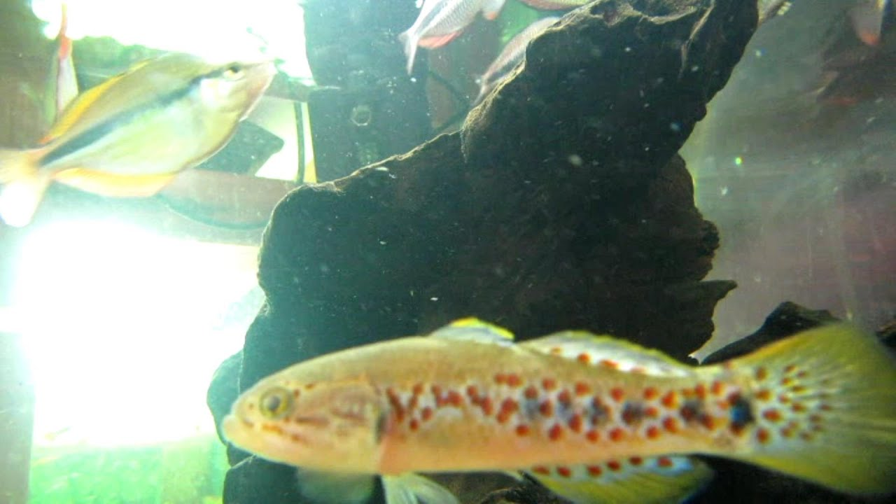 Fish aquarium in brisbane - Down Stream Aquatics Aquarium Shop Brisbane