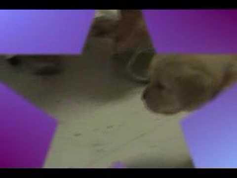 Puppy training 4 weeks