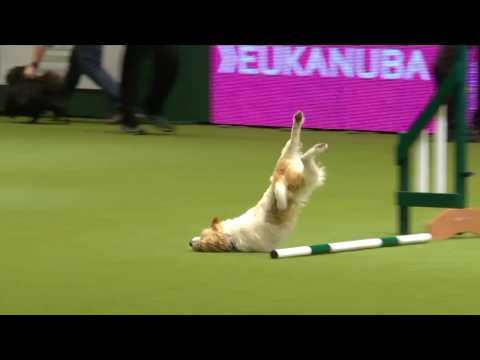 Awesome Olly at Crufts 2017 - Sound Effect Edit
