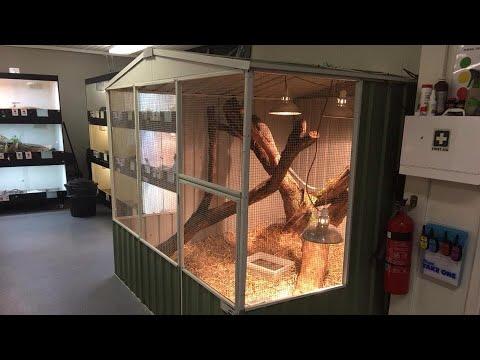 Huge Lace Monitor Enclosure Set Up!! - YouTubeLace Monitor Enclosure