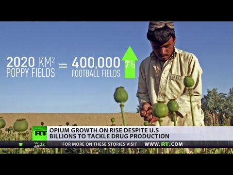 400k football fields worth of opium in Afghanistan, despite US cash injections