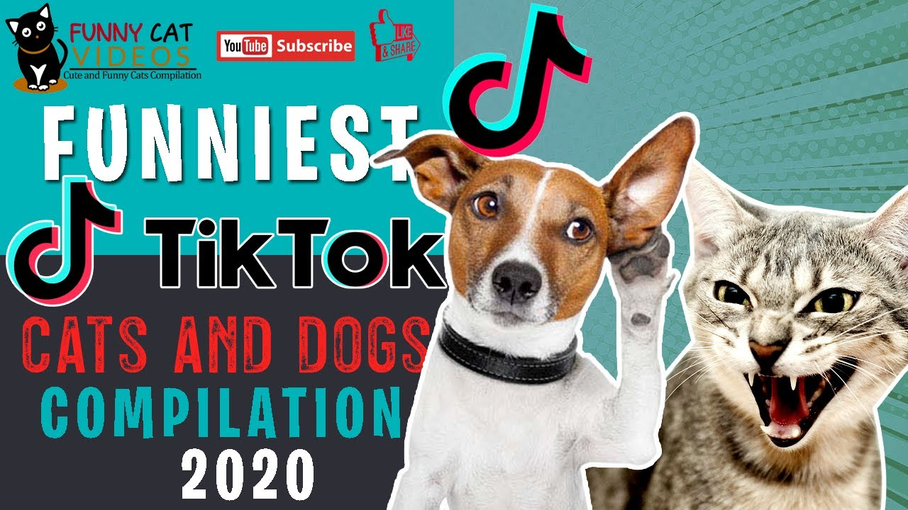 Amazing Cats and Dogs Tik Tok Compilation 2020   Funny Cats and Cute Dogs Videos