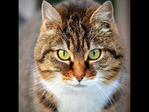 Quienes tienen gatos son más inteligentes
