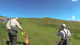Rabbit Shooting with Cocker Spaniels and Labradors