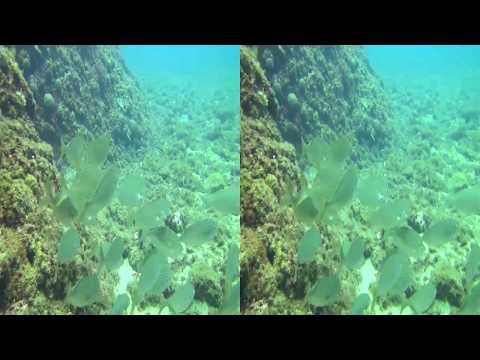 Une plongée en 3D avec Laurent dans la calanque de Figueroll