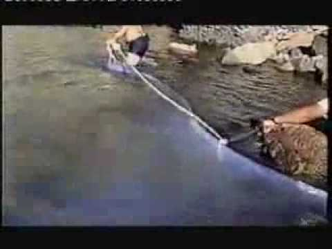 longest fish in the world