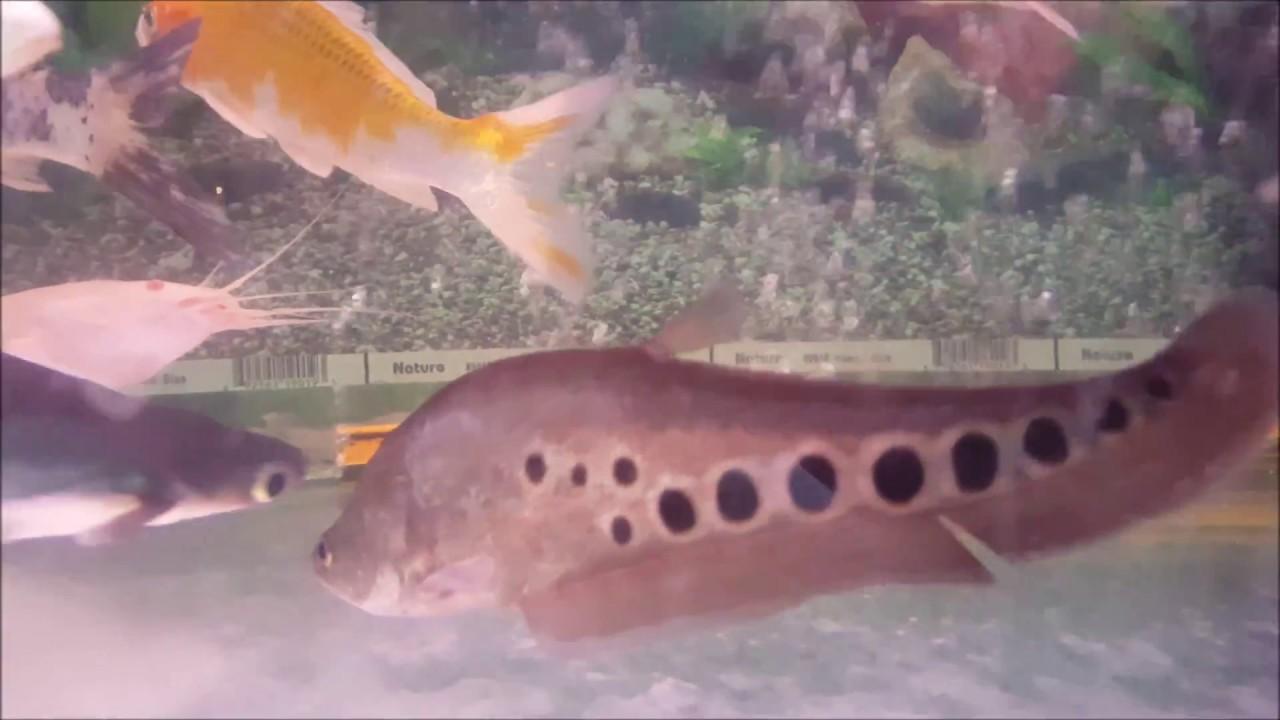 most beautiful and colorful aquarium fishes colour therapr aquarium ...