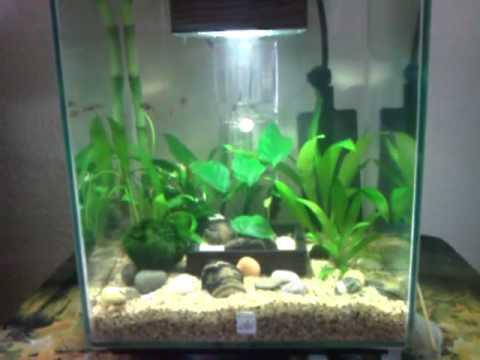 Fluval chi planted nano youtube for Fluval chi fish tank