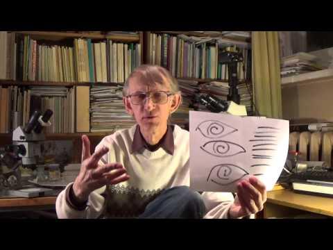 Трихинеллез - симптомы болезни, профилактика и лечение