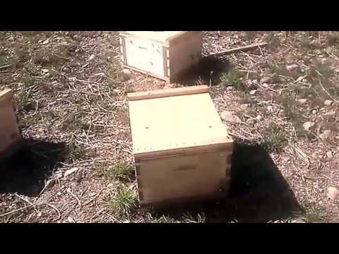 Eco Bee Box equipment in use
