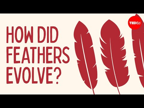 Video image: How did feathers evolve? - Carl Zimmer