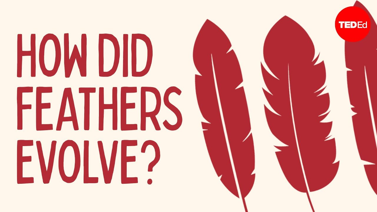 How did feathers evolve? - Carl Zimmer - YouTube
