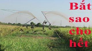 Lưới úp chim cu Cận cảnh những pha giật chim đẳng cấp nhất