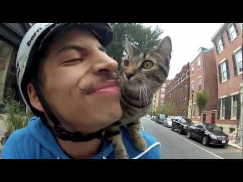 My cat can still ride a bike better than you can