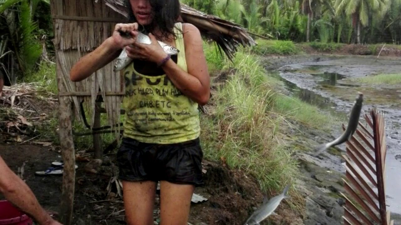 Harvisting Fish Ponds In The Philippines Beautaful Ladys