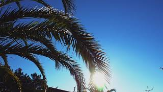 Palm leaves swaying in the sun. Free stock video. Full HD footage Free. Rec.709 1080p 60fps #11