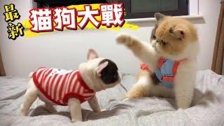 難怪狗狗辣麼傻,豆是給你拍的😠【貓狗大戰】