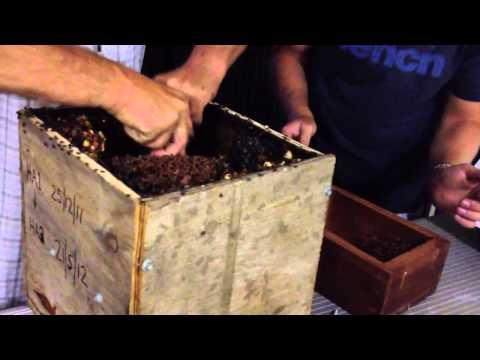 Splitting a Trigona Carbonaria hive