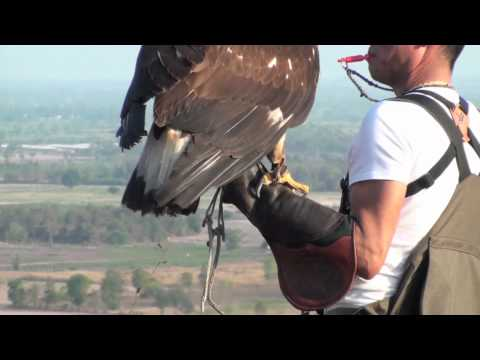 Golden Eagle Training, 5th Week Practicing