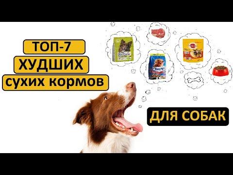 ТОП-7 худших сухих кормов для собак   Совет ветеринара