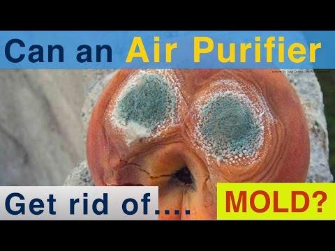 Best Mold Air Purifier