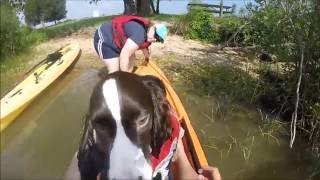 English Springer Spaniel's first ride in a kayak