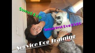 Service Dog Psychiatric Tricks||Deep Pressure Therapy