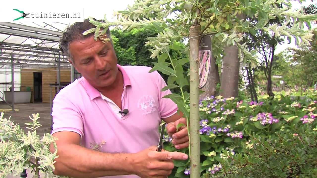 Planten En Bomen : Enten van planten en bomen tuinieren.nl youtube