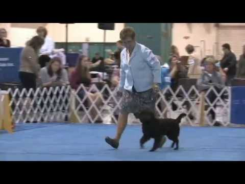 The 2017 Flushing Spaniel Show Best in Show!