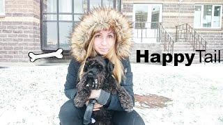 Выгул собак в СПб — HappyTail Санкт-Петербург