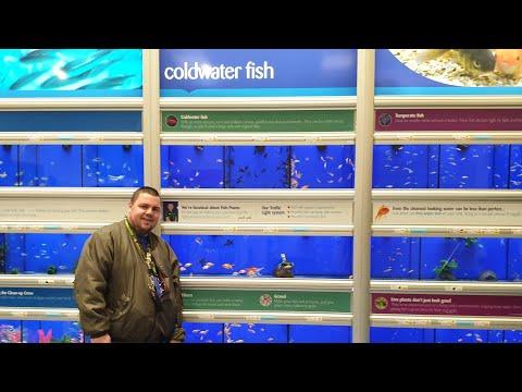 NEW COLD WATER FISH AT PETS AT HOME! (PART 1) 🐟