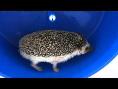 Albert The Hedgehog Ridin' Dirty