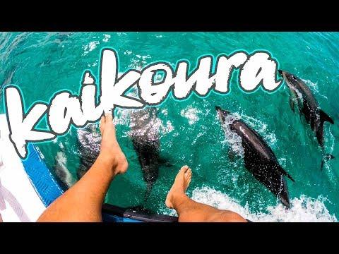 TOP 5 things to do in Kaikoura (New Zealand Hidden Gem)