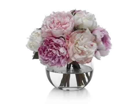 Peony Vase Beautiful Pictures Romance
