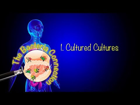 The Bacteria Connection: Cultured Cultures - Oscar Sande (1/4)