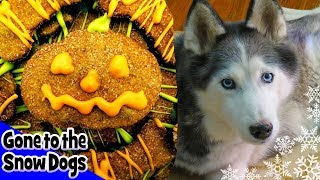 How To Make Pumpkin & Peanut Butter Dog Treats | Snacks With The Snow Dogs 14