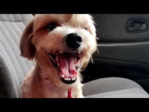Видео: Собака благодарна за спасение! Эта собака сидела на обочине, а на шее висела записка