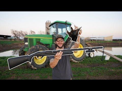 Dairy Farm Hunt Using My New Benelli Super Black Eagle 3!!!