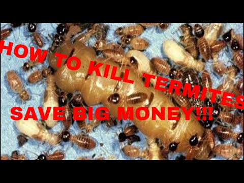 how-to-kill-termites-do-it-yourself-and-save-big-money!!!