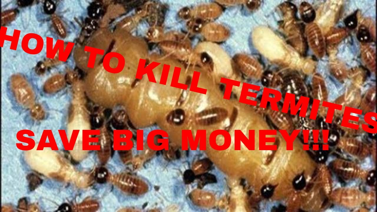 How to Kill Termites Do it Yourself and SAVE BIG MONEY!!! - YouTube