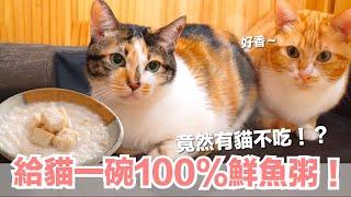 好味小姐-超誘貓的貓粥-大家都很愛-除了-貓鮮食廚房ep177