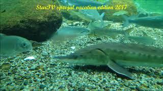 Polskie ryby w polskich czystych rzekach z kamerki online
