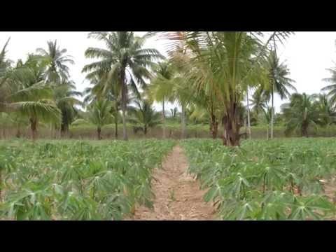 Thailand Study Tour 2013 - Agriculture Farming