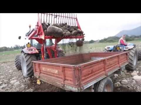 Raccoglisassi raccolta sassi cavalli cavalli sardegna for Cerco acquario per tartarughe usato