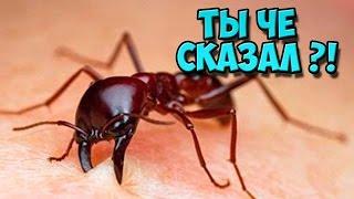 ЭТОГО вы НЕ ЗНАЛИ о муравьях