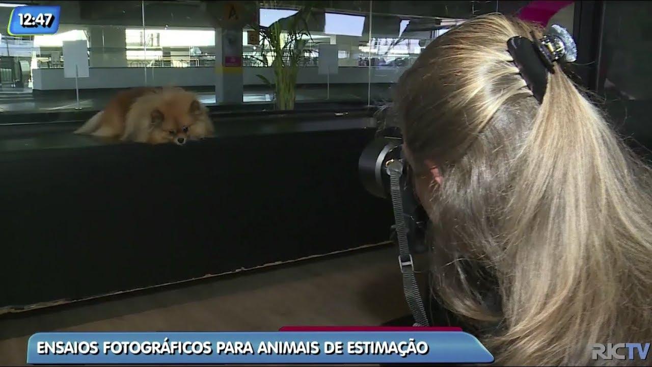 Procura por ensaios fotográficos para animais de estimação cresce no Brasil