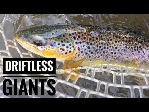 Two Driftless Giants Back-to-Back - Driftless Fly Fishing - Early Season