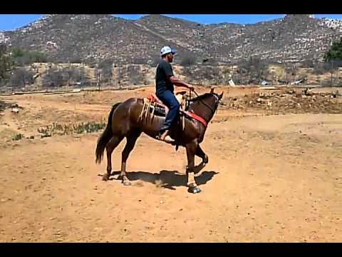 Alberto cabrera arrendando caballos