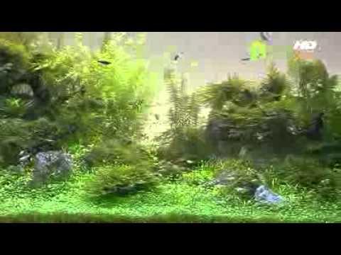 Phong thủy bể cá và lựa chọn cá cảnh để nuôi