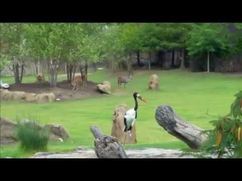 Ohio Zoo | USA Travel | Wild Life Taken by Samsung Galaxy Note 4 | The Cincinnati Zoo